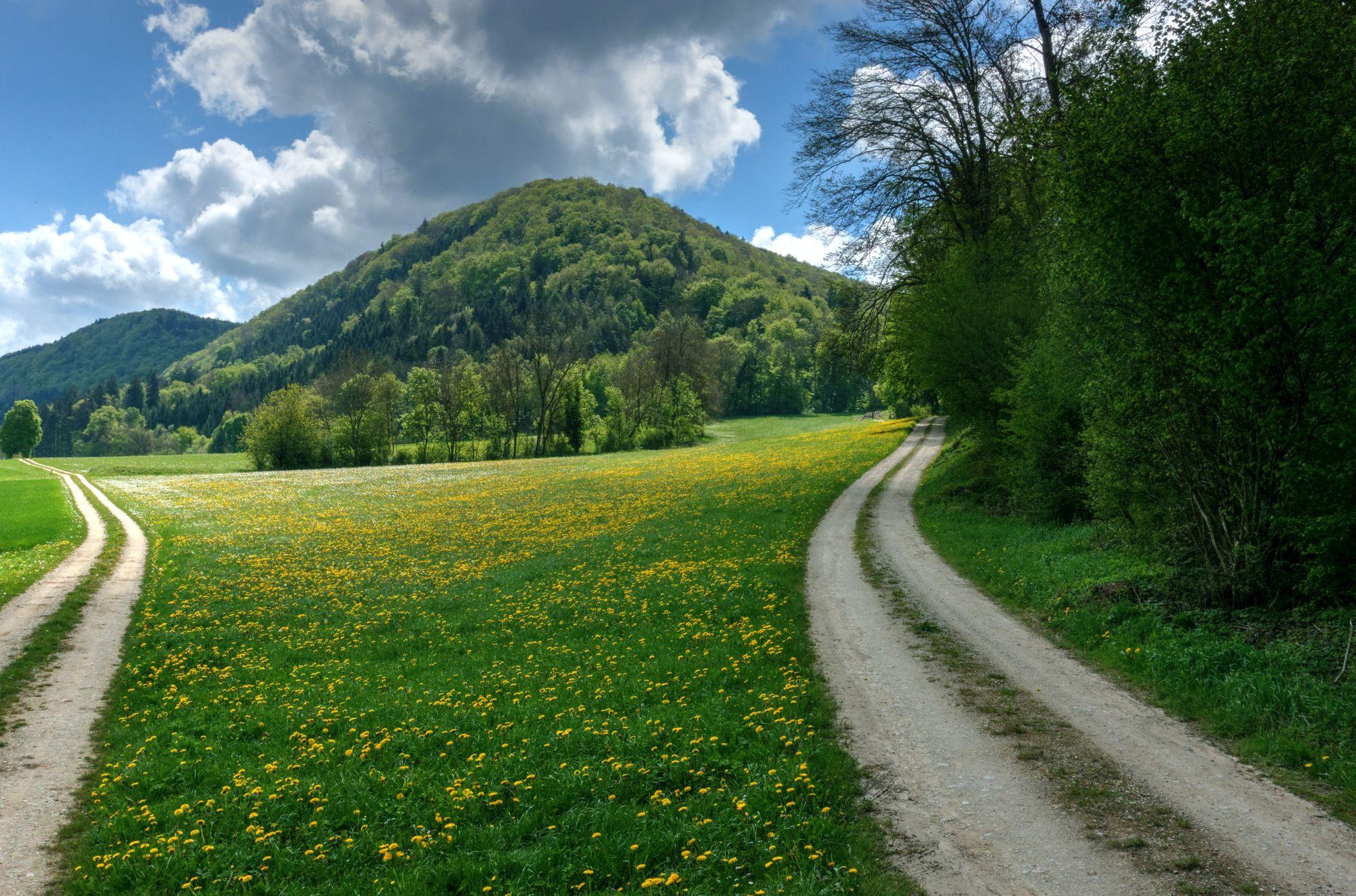 Der Waldboden im Frühling